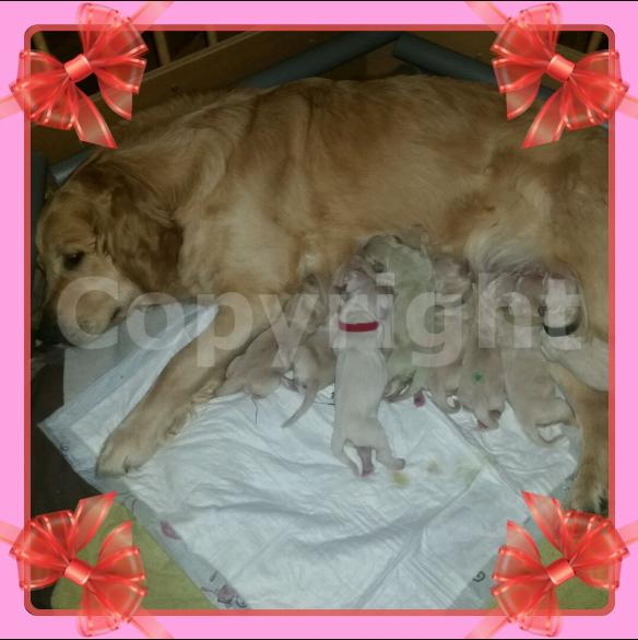 Hundedame Arina mit ihren ersten Wurf